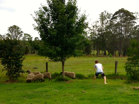 James playing with the escaped sheep